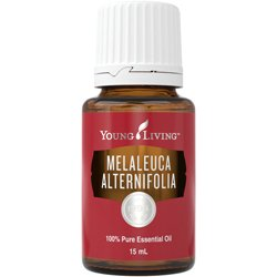 Young Living Tea Tree/Melaleuca ätherisches Öl