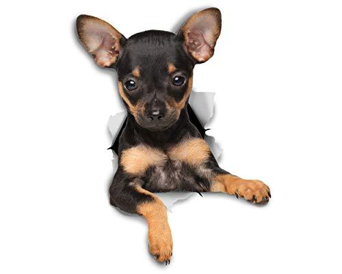 Winston & Bear -Pack 2 - pegatinas 3D perro Terrier Toy cachorro para pared, pegatinas de nevera Toy Terrier cachorro