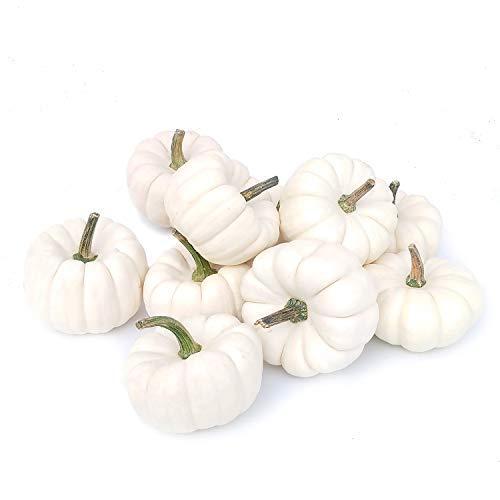 Preisvergleich Produktbild 10 weiße Kürbisse: Baby Boo Kürbisse weiß ca.9-10 cm / frische Kürbis-Deko / Deko-Kürbisse Halloween / Speisekürbisse / Zierkürbisse - echte Kürbisse