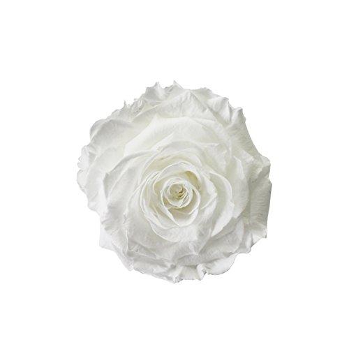 eternal-roses-xxl-rosenkopf-konserviert-farbe-white