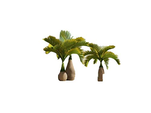 KINGDUO 20 Piezas Exóticas Botella Semillas Bonsai Tropical Ornamental Planta Semillas Jardín...