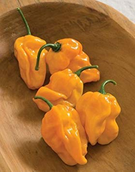 VISA STORE 125 Samen von Numex Suave orange - Hot Peppers