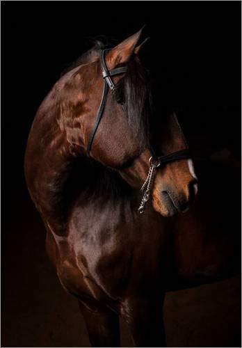 Leinwandbild 120 x 160 cm: Porträt eines Lusitano-Hengstes von Jak Wonderly/National Geographic - fertiges Wandbild, Bild auf Keilrahmen, Fertigbild auf echter Leinwand, Leinwanddruck -