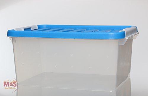 Aufzucht und Transport Box small, 36x26x18cm