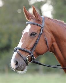 Shires Avignon Komfort Trensenzaum mit Aufsteckblitz, eiche, Pony