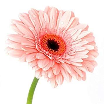 VISTARIC 3: 100 Pcs vrai Cactus Seeds, Mini Cactus, Figuier, Succulentes japonais Graines Bonsai Fleur, Plante en pot pour jardin 3
