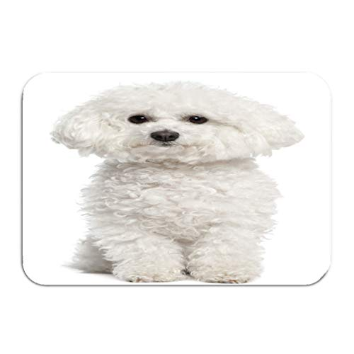 hanbaozhou Carpet Rug Door mat Bichon Frise Years Old Sitting 16 * 24 inch