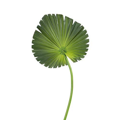 artplants Set 'Washingtonia Palme Kunstwedel + Gratis UV Schutz Spray' - Künstliches Blatt LAURINA, grün, 60 cm
