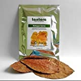 Tantora Indian Almond (Catappa) Leaves Size M - 10 leaves