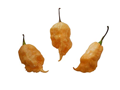 Jay's Peach Ghost Scorpion -Ultrascharfe pfirsichfarbene Super Hot Chili- Sehr Selten - Pepper Ghost '