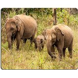 luxlady-gaming-mousepad-image-id-22451717-a-small-elephant-calf-is-hiding-behind-its-mother-in-yala-