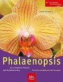 Phalaenopsis: Die schönsten Sorten der Falterorchidee. Richtig auswählen und pflegen