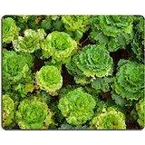 luxlady Gaming Mousepad Bild-ID: 22835546Bio-Gemüse Plantation