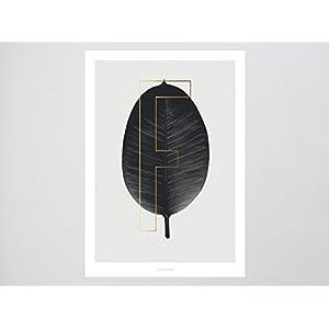 Kunstdruck Poster / ABC Plants – F