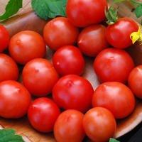 Just Seed Tomaten, Riesentraube 100 Samen Gro packung
