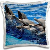 Kike Calvo Dolphins - Four dolphins on surface of the water at Oceanographic Aquarium in Valencia, Spain - 16x16 inch Pillow Case