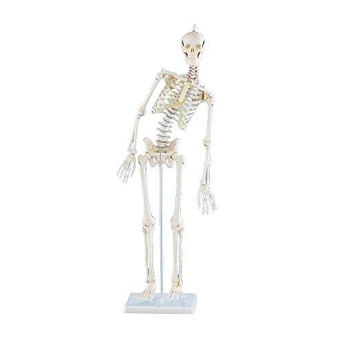 r-Skelett