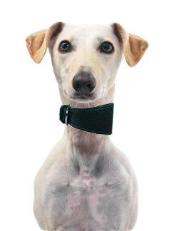 Dogs & Co in pelle morbida, motivo: cane, di collari per Whippets & Hounds