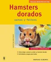 Hamsters dorados (Mascotas en casa)