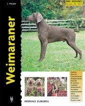 Weimaraner (Excellence)