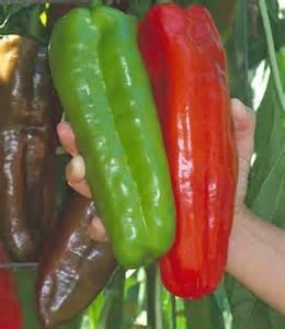 100 graines / sac géante rouge piment épices Spicy Chili Pepper plantes Graines Plantes maison de jardin