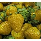 Yellow -Strawberry (Yellow Wonder) 20 Seeds RAR ***Original-Seeds*** by Samenchilishop