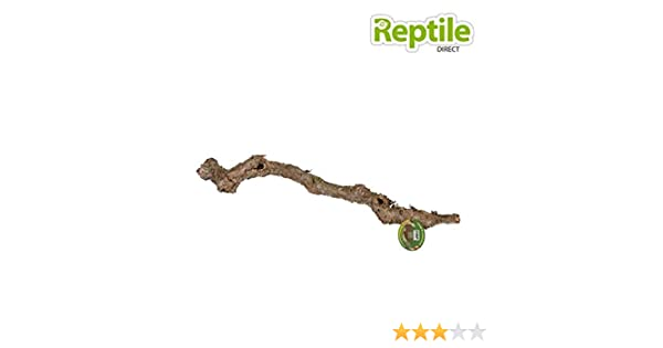 ProRep Cork Oak Branch 40-60 cm