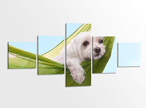 Sommer Gerahmt (Leinwandbild 5 tlg. 200x100cm Hund faul lustig Hängematte Kat6 Sommer Tierwelt Bilder Druck auf Leinwand Bild Kunstdruck mehrteilig Holz gerahmt 9AB1291)