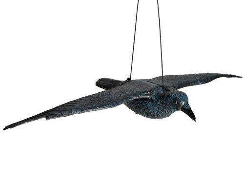 siena-garden-672958-corvo-volante
