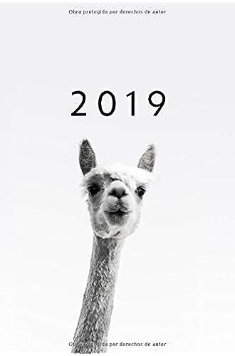 2019: ENE