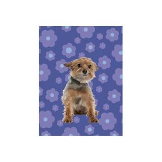 Yorkshire Terrier Boxed Blank Notecards by Apt 2