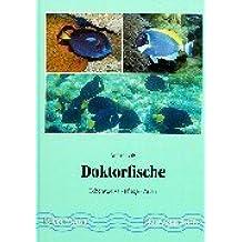 Doktorfische: Lebensweise - Pflege - Artbestimmung