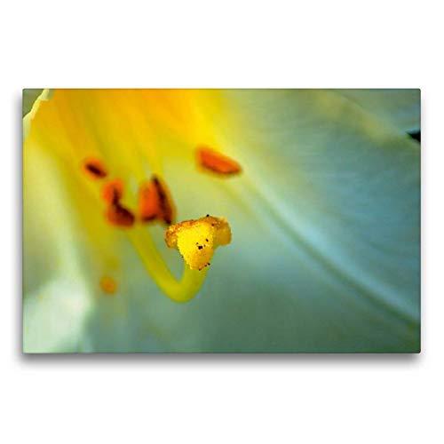 Premium Textil-Leinwand 75 x 50 cm Quer-Format Madonna Lilie | Wandbild, HD-Bild auf Keilrahmen, Fertigbild auf hochwertigem Vlies, Leinwanddruck von Alain Gaymard
