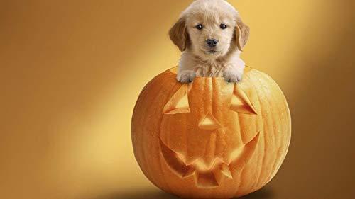 ei Crystal Strass Stickerei Bilder Hund Bereit Für Halloween Hauptwanddekor-Kunst-Handwerksgeschenk ()