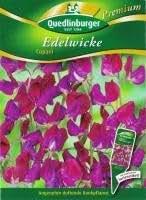Edelwicke Cupani Premium