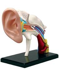 BestDental 4D 22 PARTS EAR ANATOMY MODEL MODEL MEDICAL SIMULATION HUMAN ANATOMY