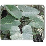 green-giant-leaves-mouse-pad-mousepad-fields-mouse-pad