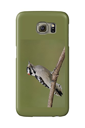 downy-woodpecker-galaxy-s6-cell-phone-case-slim-barely-there