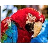 luxlady Gaming Mousepad-ID: 40637512Nahaufnahme der Kopf Portrait Of rot Aras oder Ara Kakadus Papagei (Kakadu Ara Papagei)