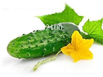 Potseed . Terrasse Gemüse Herbst Melone Gemischte Gurke Garten Gemüse Hausgarten Einpflanzen Can Be erfrischende Obst-50 PC: 7