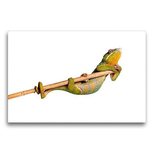 Calvendo Premium Textil-Leinwand 75 cm x 50 cm quer, Pantherchamäleon | Wandbild, Bild auf Keilrahmen, Fertigbild auf echter Leinwand, Leinwanddruck: Turnen Tiere Tiere