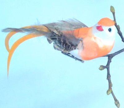 Vogel orange mit langem Federschweif 12er Set