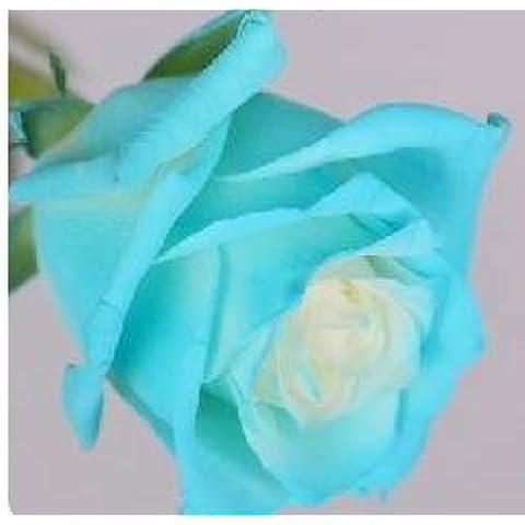 Rose Seed 17 variedades de color de rosas raras que usted no puede perderse el balcón en maceta rosas serie de semillas de flor de 50 PC