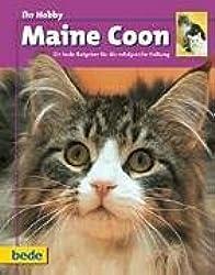 Ihr Hobby Maine Coon.