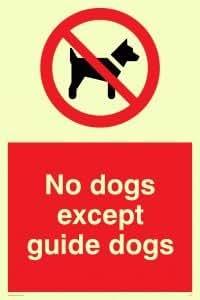 Viking Schilder pv47-a5p-pvKeine Hunde außer Guide Dogs Zeichen, Aufkleber, nachleuchtend, 200mm H x 150mm W