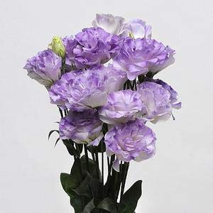 Elitely 30 Stcke Samen/Packung Lisianthus 25 Farben Sammlung Samen Lisianthus Blume Fr Hausgarten: Sky Blue