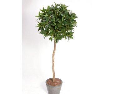 künstlicher Lorbeerbaum, schwer entflammbar, mit Echtholzstamm, Blattkrone ca. Durchmesser 60cm, Höhe ca. 140cm - Kunstbäume Kunstbaum künstliche Bäume Kunstpflanzen Kunstpalmen Dekopalmen