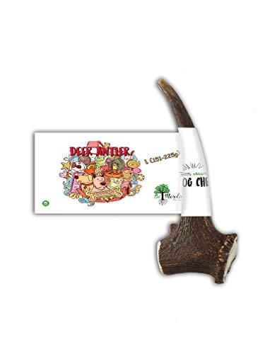 Bio Mordiscos Hundespielzeug kauspielzeug aus Hirschgeweih für