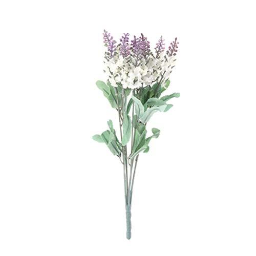Echter Echter Lavendel
