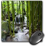 danita-delimont-flora-flora-bamboo-forest-waterfall-haleakala-np-maui-us10-jgs0016-jim-goldstein-mou